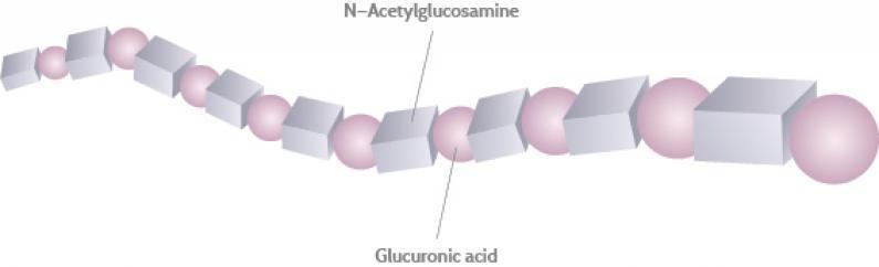 Структура гіалуронової кислоти